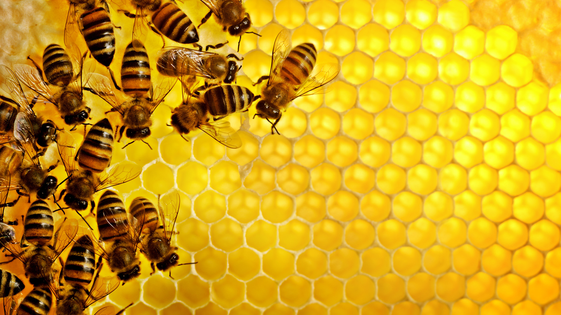 всё для пасеки и пчеловодства